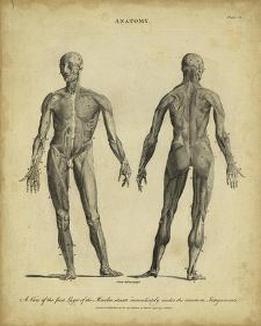 Anatomy Study IV by Jack Wilkes