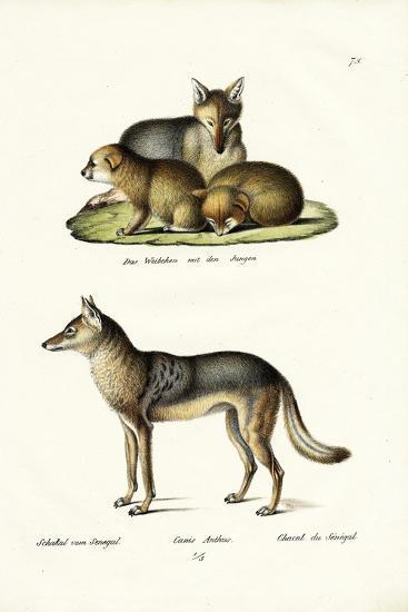 Jackal, 1824-Karl Joseph Brodtmann-Giclee Print