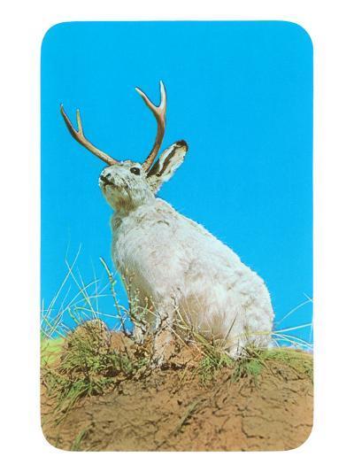 Jackalope, Horned Rabbit--Art Print