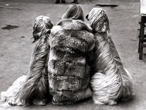 Jackie Faith and Her Afghan Hounds, March 1968