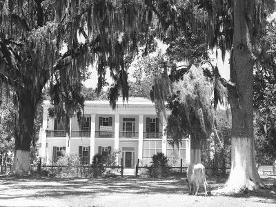 Jackson Plantation Home-Marion Post Wolcott-Photographic Print
