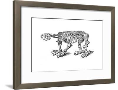 Skeleton of Megatherium, Extinct Giant Ground Sloth, 1833