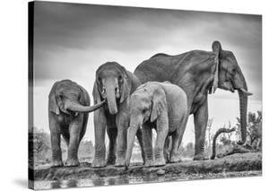 A Giant Unity by Jaco Marx