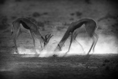 Battle in Black and White