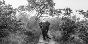 Walking Giant by Jaco Marx