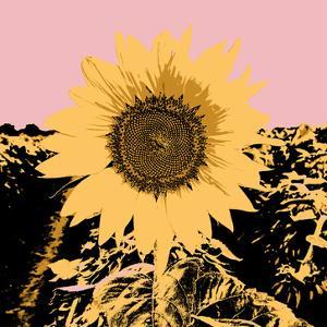 Pop Art Sunflower III by Jacob Green