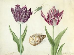 Two Tulips, a shell and a grasshopper, 1637-45 by Jacob Marrel