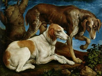 Two Hunting Dogs Tied to a Tree Stump, c.1548-50