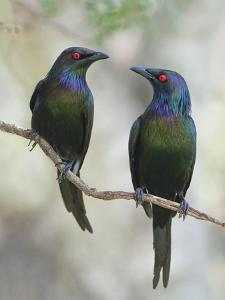 Beautiful Couple by Jacqueline Hammer