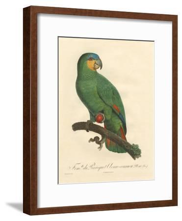 Barraband Parrot No. 110