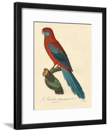 Barraband Parrot No. 78