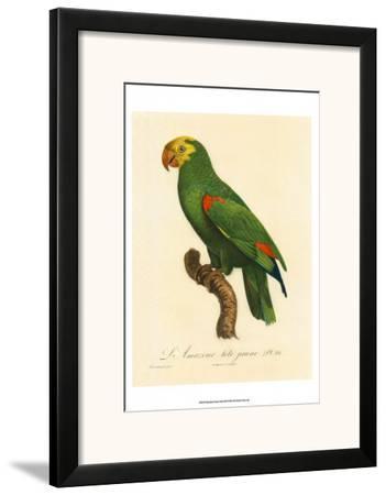 Barraband Parrot No. 86
