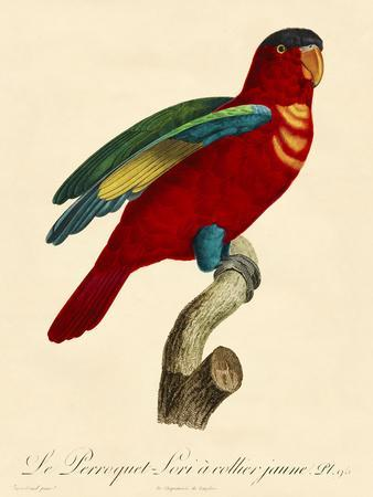 Barraband Parrot No. 95