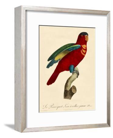 Barraband Parrot No. 95