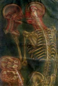 """The Brain and the Spinal Chord, from """"Exposition Anatomique De La Structure Du Corps Humain,"""" 1759 by Jacques Fabien Gautier d'Agoty"""