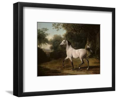 A Grey Arab Stallion in a Wooded Landscape
