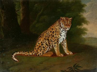 A Leopard in a Landscape