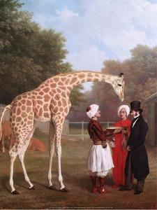 Nubian Giraffe, 1827 by Jacques-Laurent Agasse
