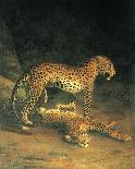 Two Leopards Lying in the Exeter Exchange, 1808-Jacques-Laurent Agasse-Mounted Premium Giclee Print