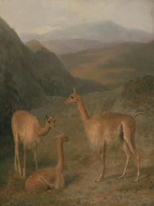Vicunas, 1831 by Jacques-Laurent Agasse