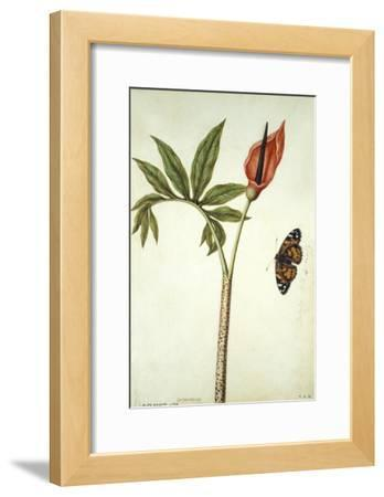 Botanical Study of a Dragon Lily and Butterfly