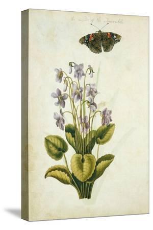 Botanical Study of a Violet