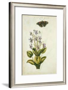 Botanical Study of a Violet by Jacques Le Moyne De Morgues