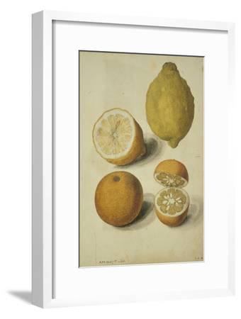 Botanical Study of Oranges and Lemons
