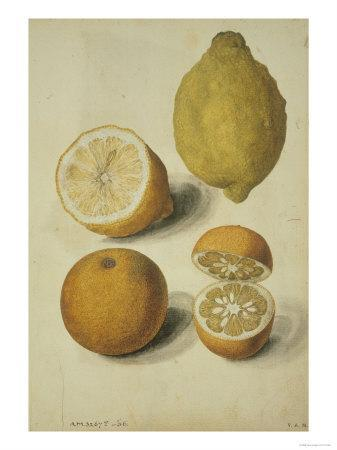 Botanical Study of Oranges and Lemons