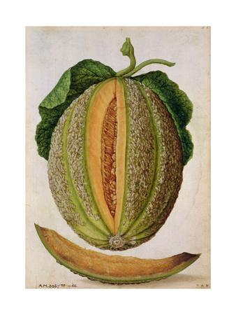 Melon, C.1568