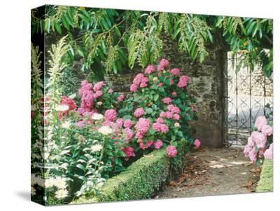 Pathway and Gate Low Clipped Box, Hydrangea