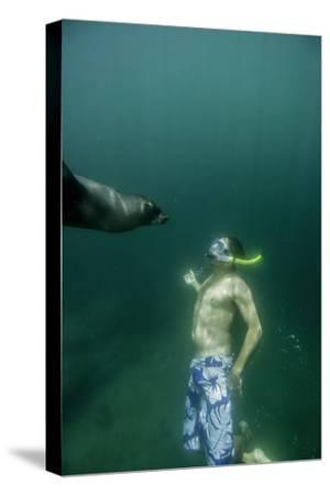 A Naturalist Guide, Playing with a Galapagos Sea Lion Pup