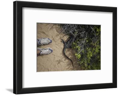 A Tourist Observes a Galapagos Land Iguana on a Trail