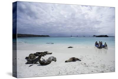 Tourists and Curious Galapagos Sea Lions Mingle on the Beach
