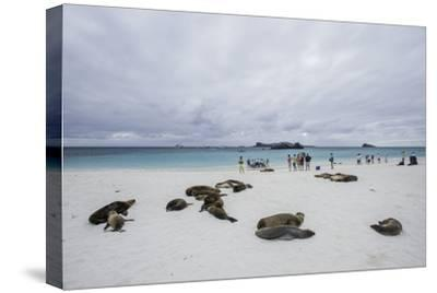 Tourists and Galapagos Sea Lions Mingle on the Beach