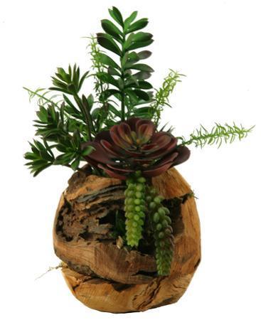 Jade & Succulent Root Ball Planter