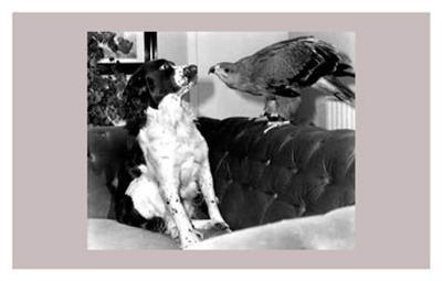 Jagger and His Friend Bow--Art Print