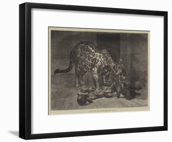 Jaguar and Cubs at the Jardin Des Plantes-Auguste Andre Lancon-Framed Giclee Print