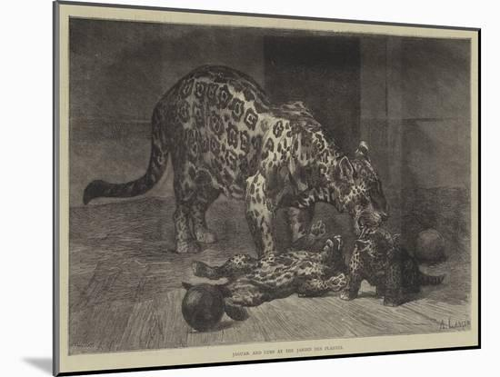 Jaguar and Cubs at the Jardin Des Plantes-Auguste Andre Lancon-Mounted Giclee Print