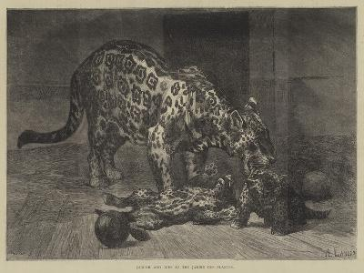 Jaguar and Cubs at the Jardin Des Plantes-Auguste Andre Lancon-Giclee Print