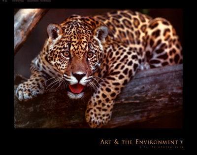 https://imgc.artprintimages.com/img/print/jaguar_u-l-e87qe0.jpg?p=0