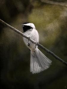 A Song in Your Heart Chickadee by Jai Johnson