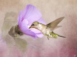 A Taste of Nectar Hummingbird by Jai Johnson