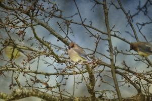 A Taste of Sunshine Cedar Wax Wings by Jai Johnson