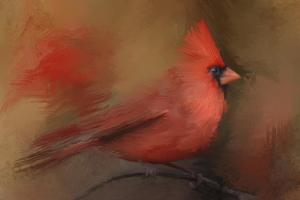 America's Favorite Red Bird by Jai Johnson