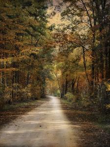 Autumn Forest 3 by Jai Johnson