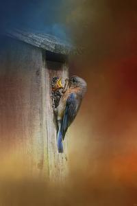 Baby Bluebird Breakfast by Jai Johnson