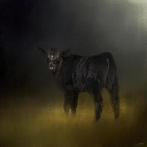Black Angus Calf in the Moonlight by Jai Johnson