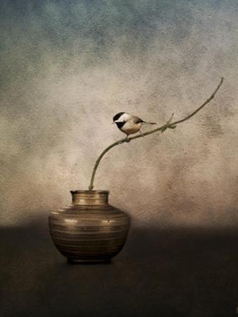 Black Capped Chickadee on a Vase by Jai Johnson