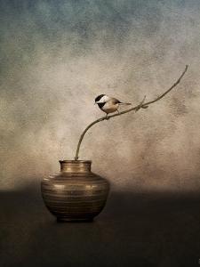 Black Capped Chickadee on a Vase by Jai Johnson